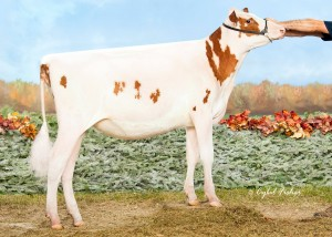 Shiloh-USA Avh Diane-Red, Nominated All-American R&W Winter Calf