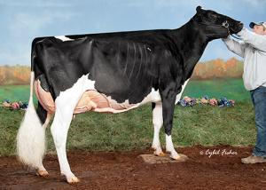 HF43187-Vale-O-Skene-Gold-Karmilla-ET